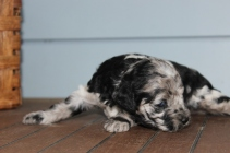patches 2 weeks (13)