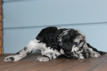 patches 2 weeks (14)