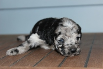 patches 2 weeks (15)