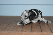 patches 2 weeks (16)