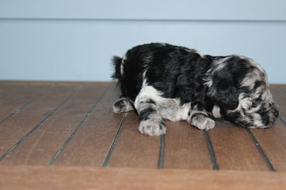 patches 2 weeks (17)