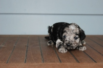 patches 2 weeks (18)