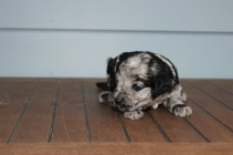 patches 2 weeks (19)