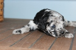 patches 2 weeks (2)