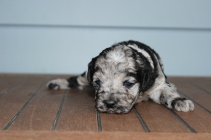 patches 2 weeks (20)