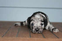 patches 2 weeks (21)