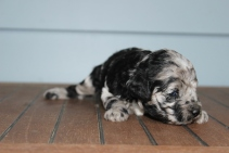 patches 2 weeks (22)