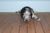 patches 2 weeks (24)