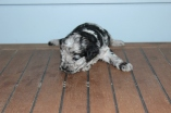 patches 2 weeks (26)