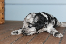 patches 2 weeks (3)