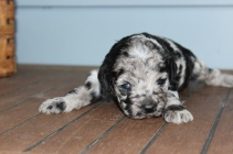 patches 2 weeks (4)