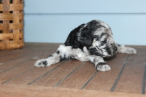 patches 2 weeks (5)