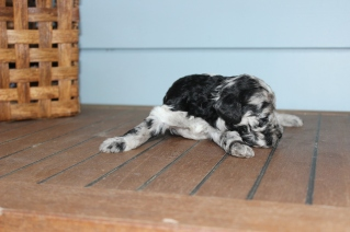patches 2 weeks (6)