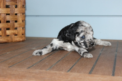 patches 2 weeks (7)