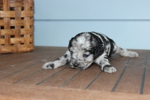 patches 2 weeks (8)