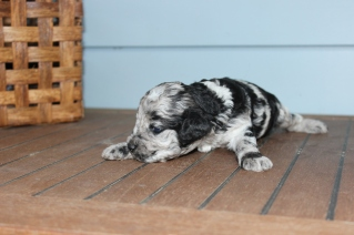 patches 2 weeks (9)